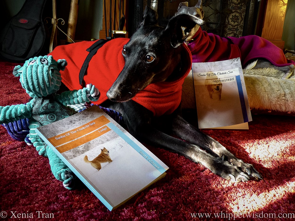 a black whippet in a red fleece with a dog toy and two books in the living room