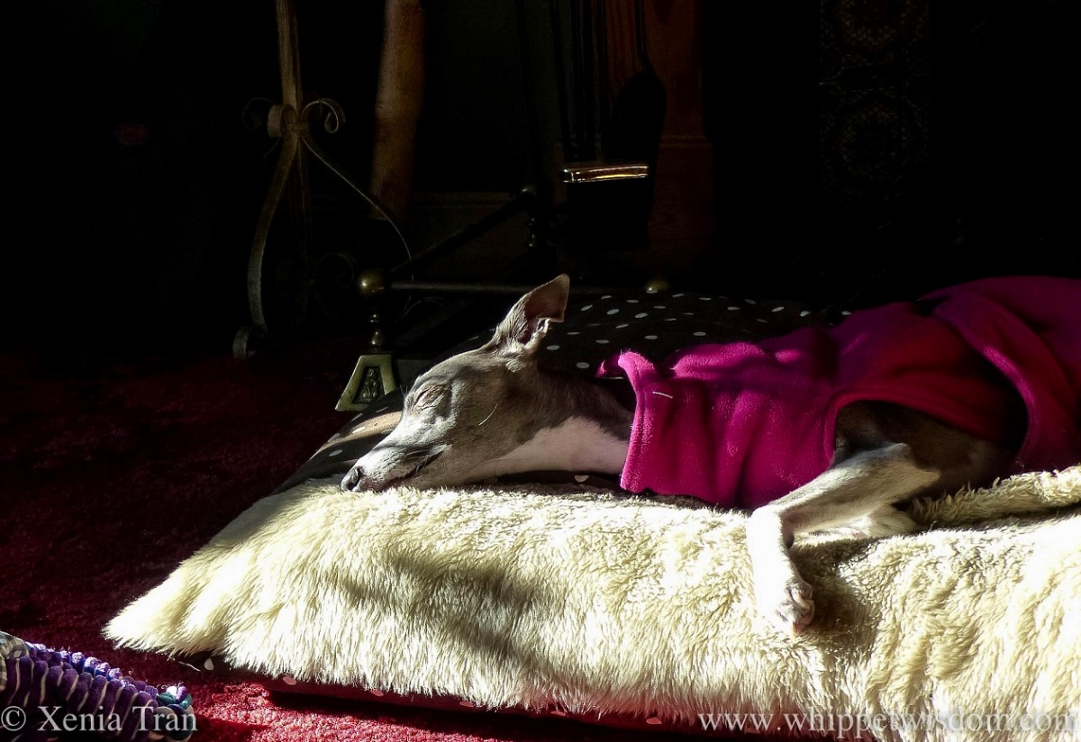 Wordless Wednesday: Sun Puddling