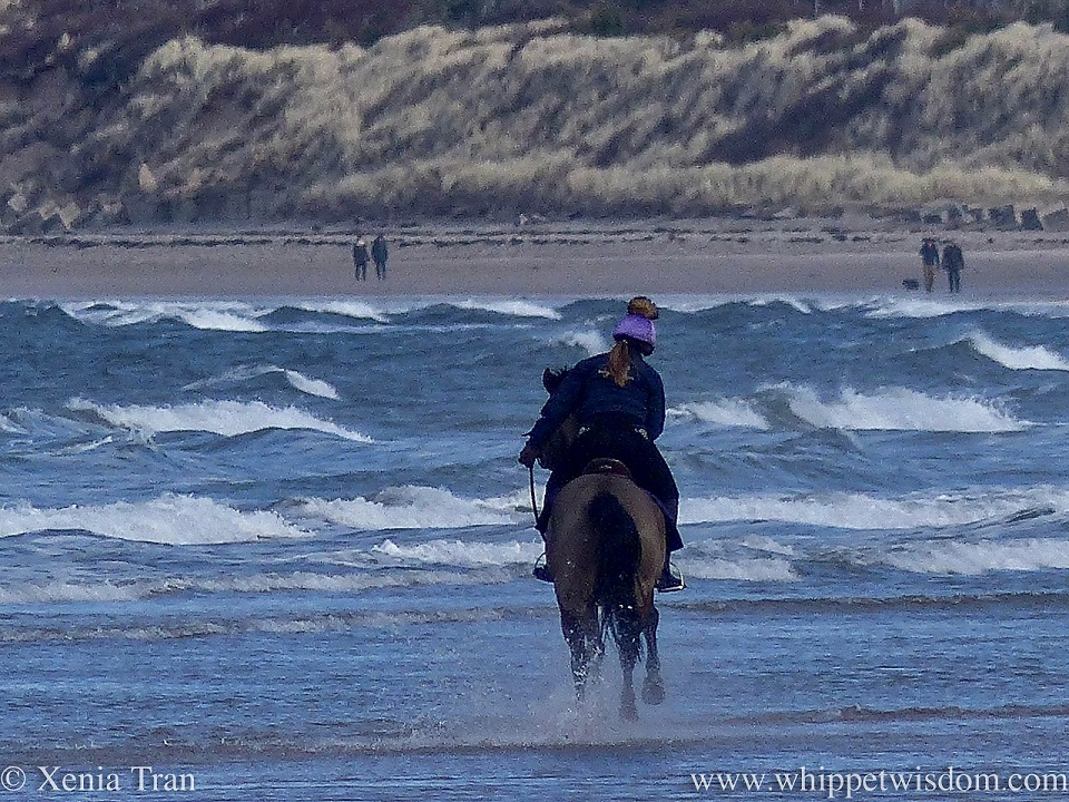 a horse and rider cantering through the waves