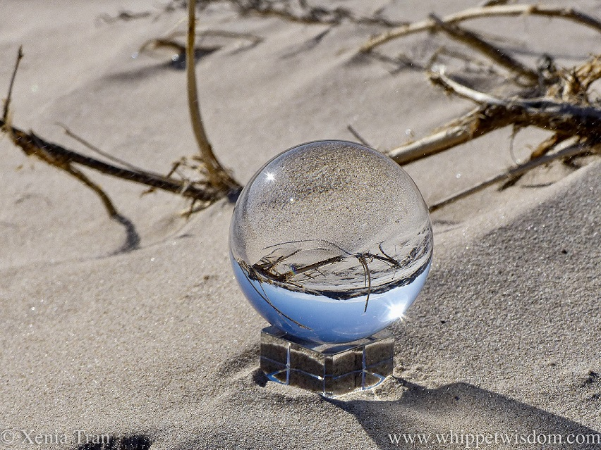 a lensball on the beach, reflecting the sky, dunes, sand and driftwood