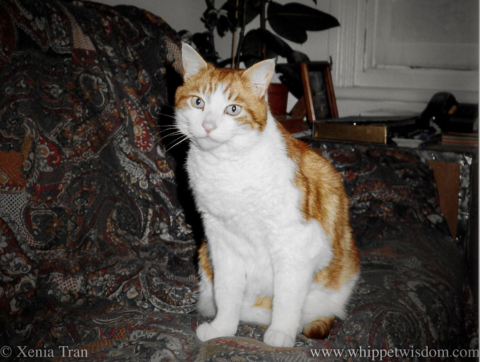 a ginger and white cat sitting upright on a sofa