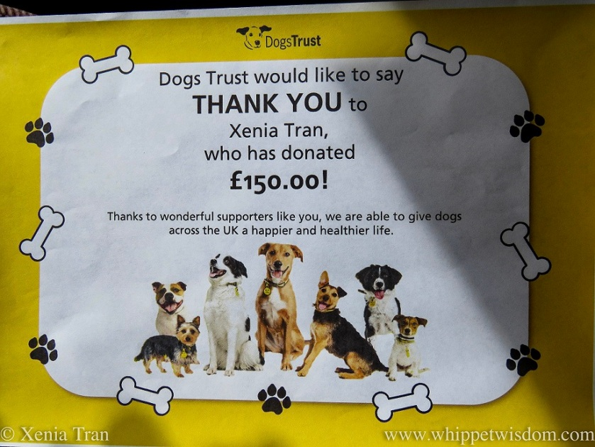 Thank You Certificate from Dogs Trust
