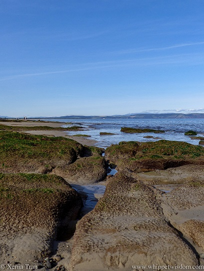 outcrops with seaweed at low tide