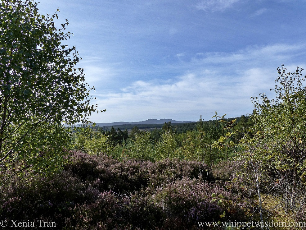 mountain views and autumnal trees and heather