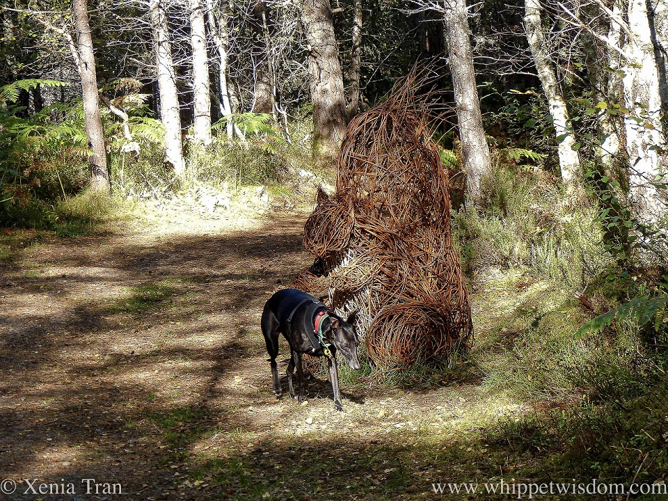 a black whippet walking past a sculpture of a giant squirrel