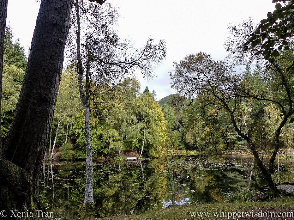 autumn in the woods around Loch Dunmore