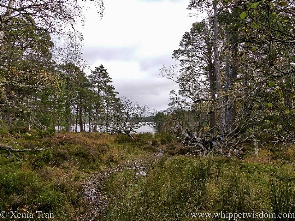 view between autumnal trees towards Loch an Eilein