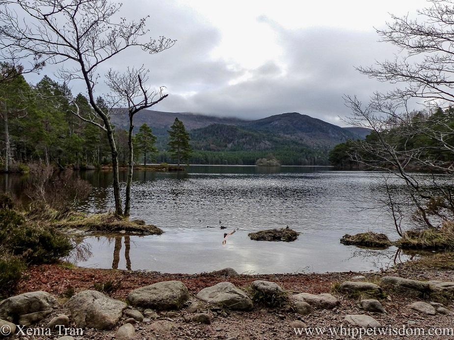 Loch An Eilein in autumn