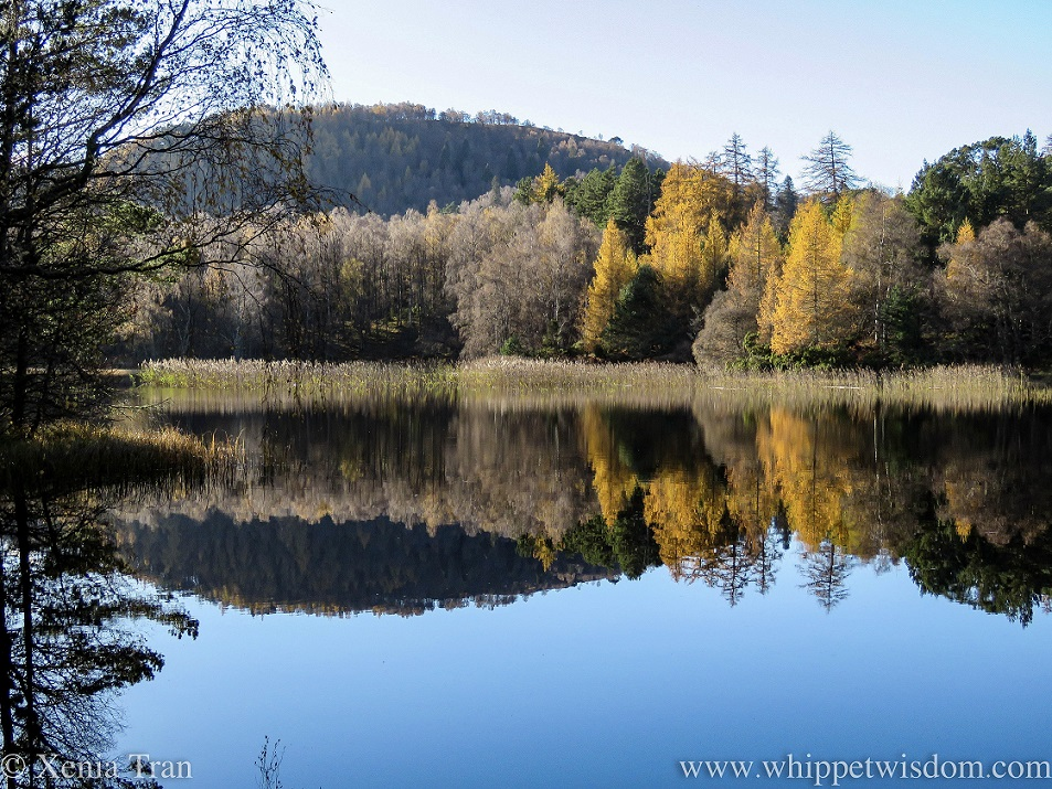 Lochan Mor in autumn with gold and leafless trees