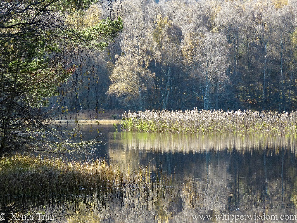 Lochan Mor in autumn with leafless trees and reeds