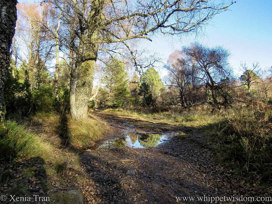 autumnal trees reflected in a wider part of a rivulet crossing the forest trail