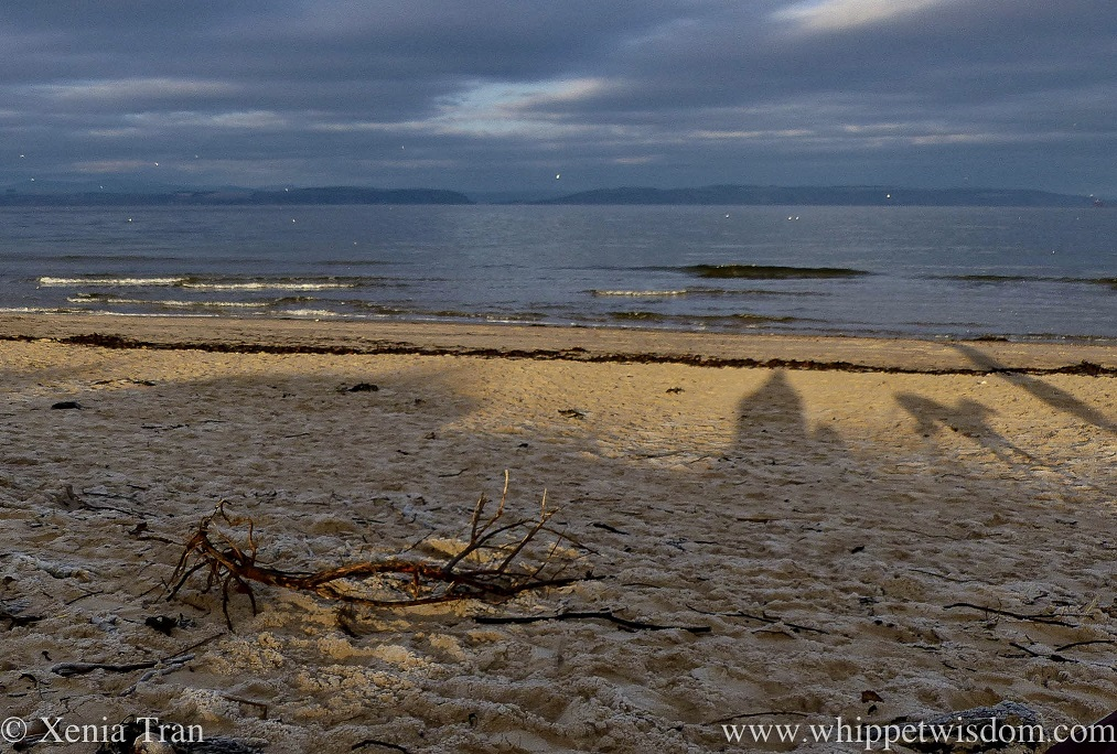 a frosty beach with driftwood and shadows of people and dogs