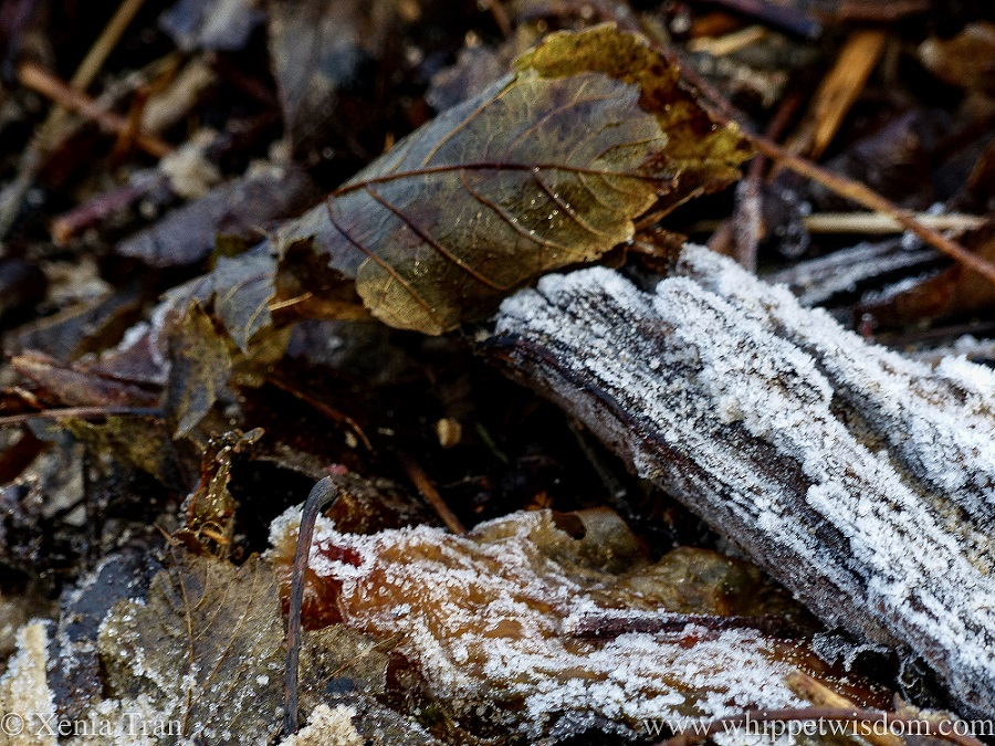 frosty driftwood and washed up leaves on the beach