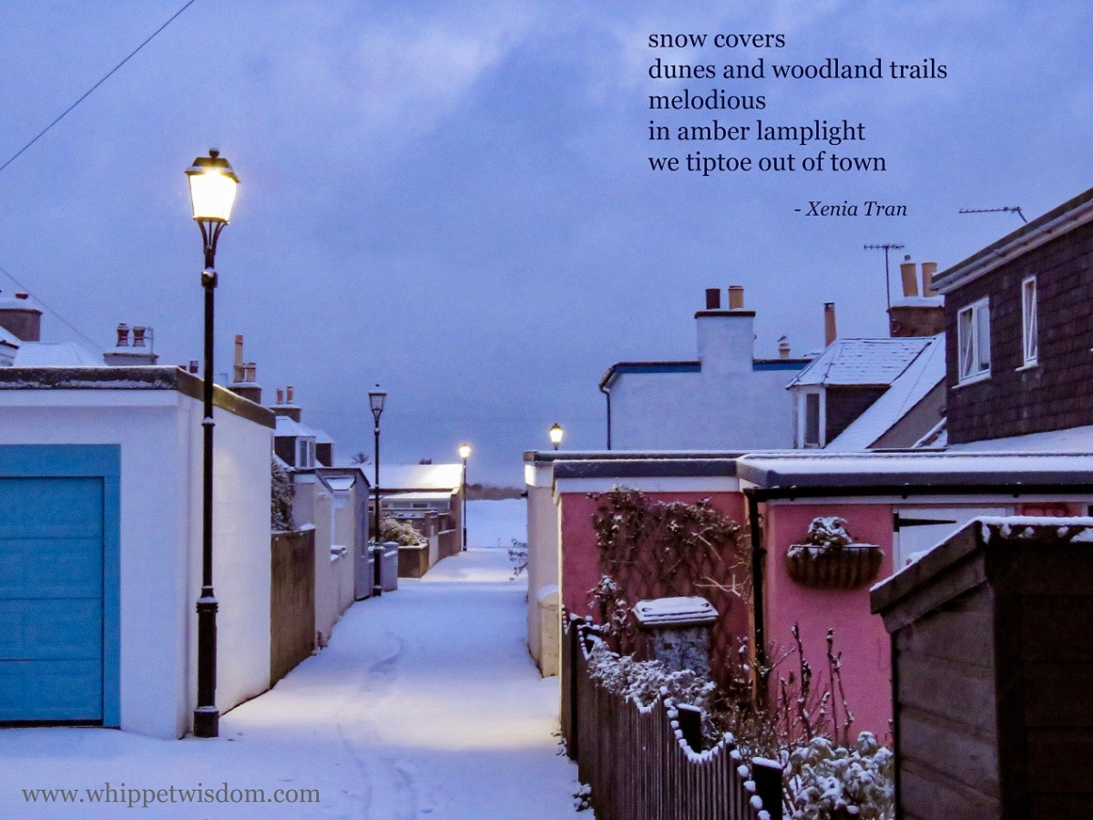 Tanka: Snow Covers