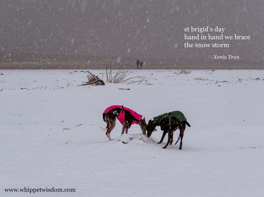 haiku by Xenia Tran and two whippets in the snow on the beach