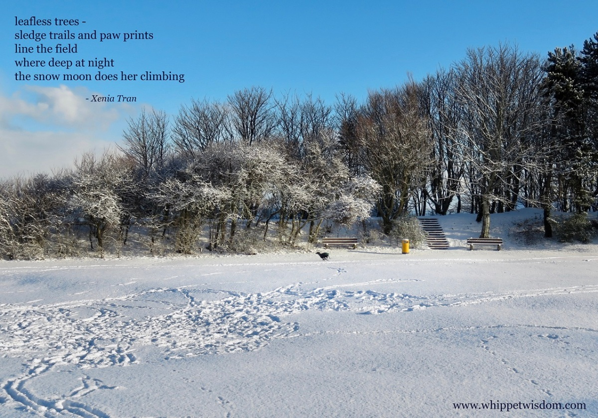 a tanka poem by Xenia Tran with an image of a whippet running through a snow-covered park
