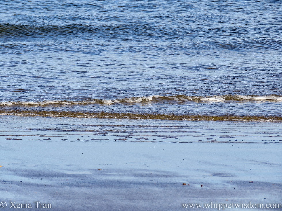 close up of the waves and surf near the tidal line