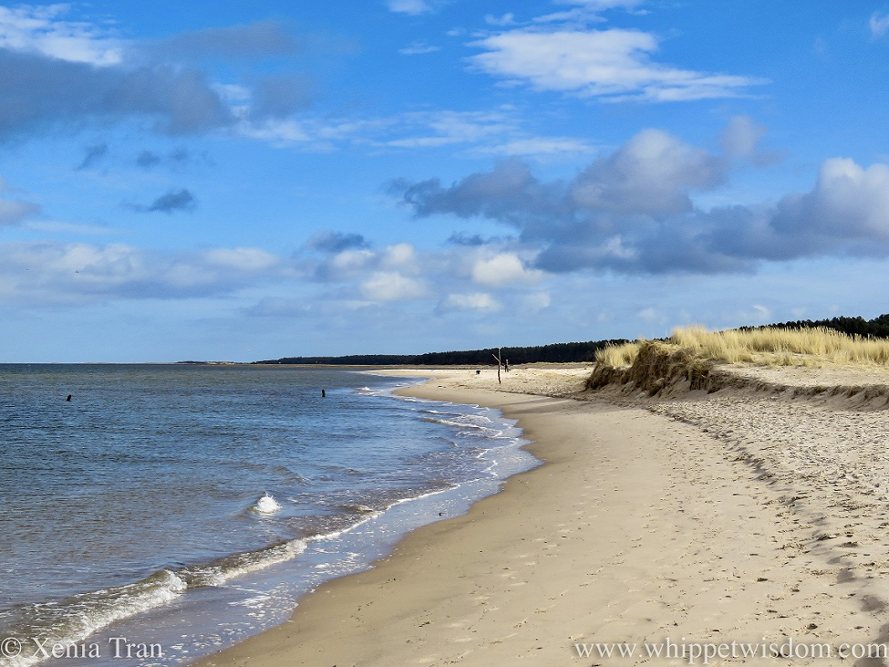 a sweeping narrow strip of beach beside the dunes under a blue sky with fluffy clouds