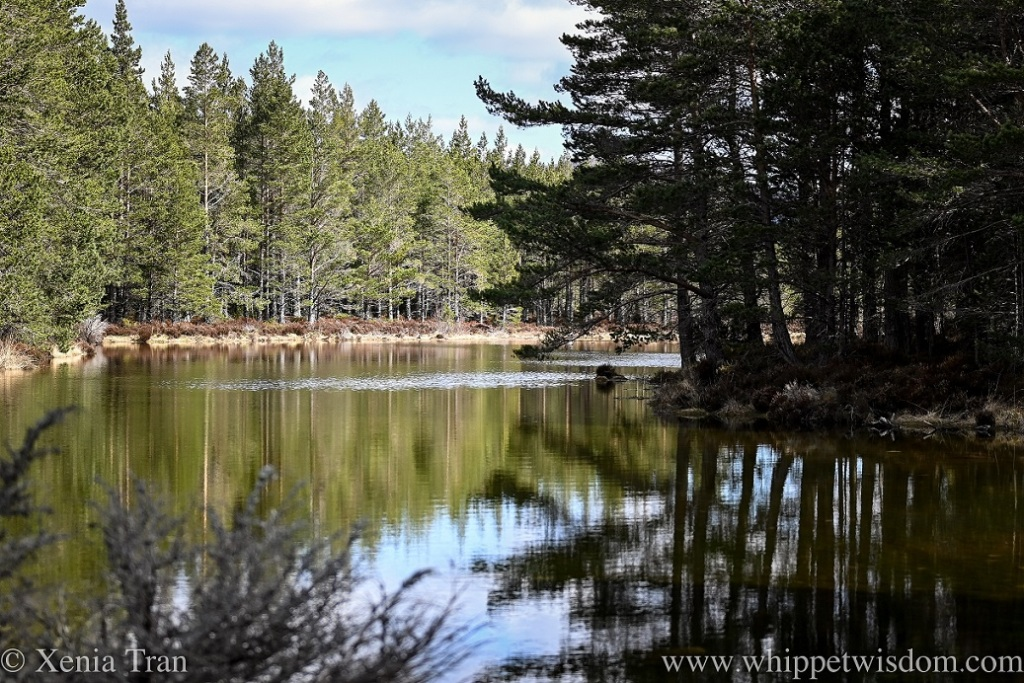 Lochan Deo in Spring, pine and sky reflected in the water