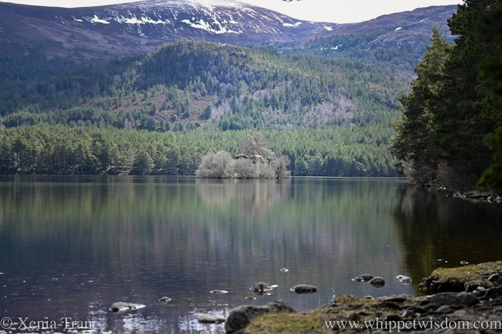 Loch an Eilein and castle in Spring