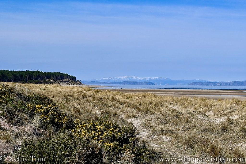 dunes with marram grass and gorse overlooking the firth and mountains beyond