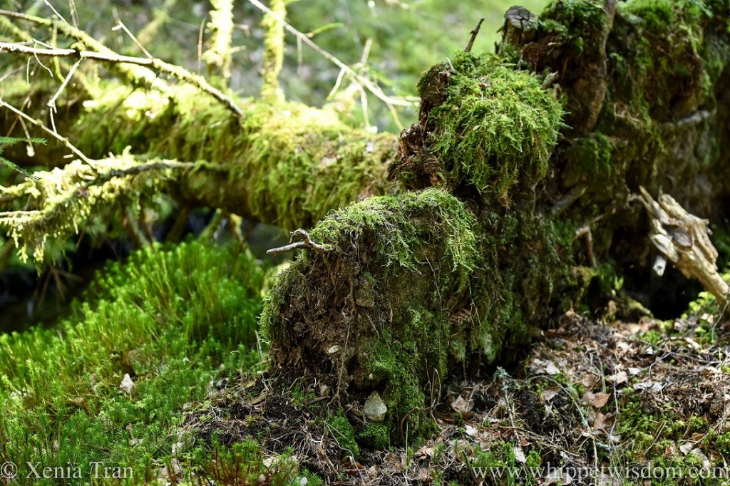 a fallen tree covered in moss resting on the forest floor