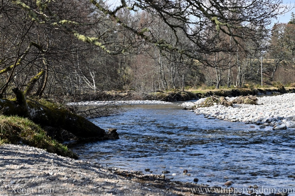 the river Feshie in Spring