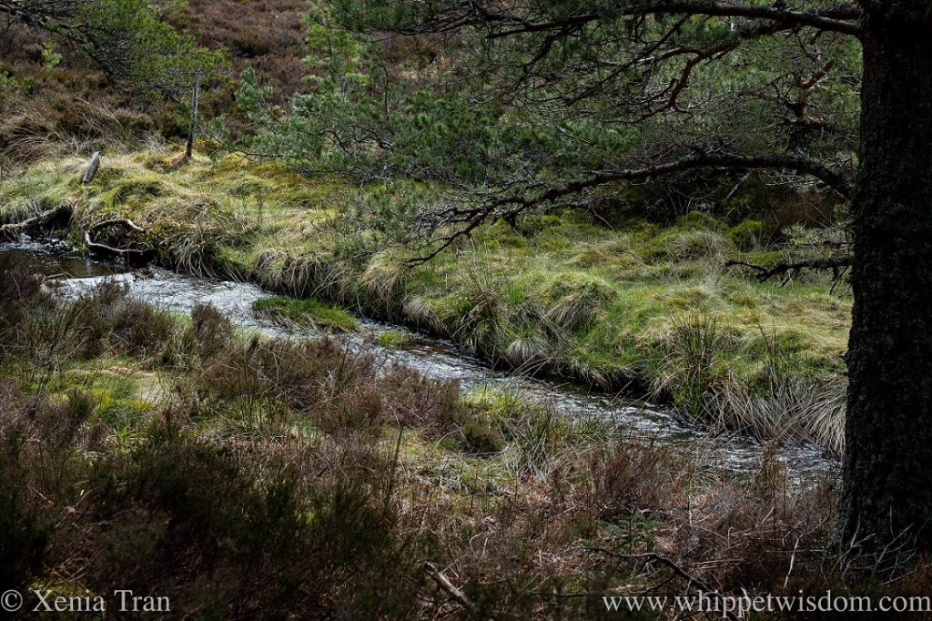 a stream flowing near the bottom of a woodland hill
