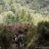 Haibun: Faery Spotting