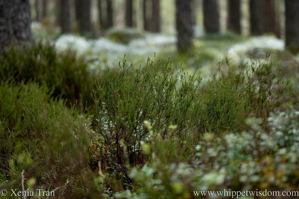 close up of spring heather growing on the forest floor
