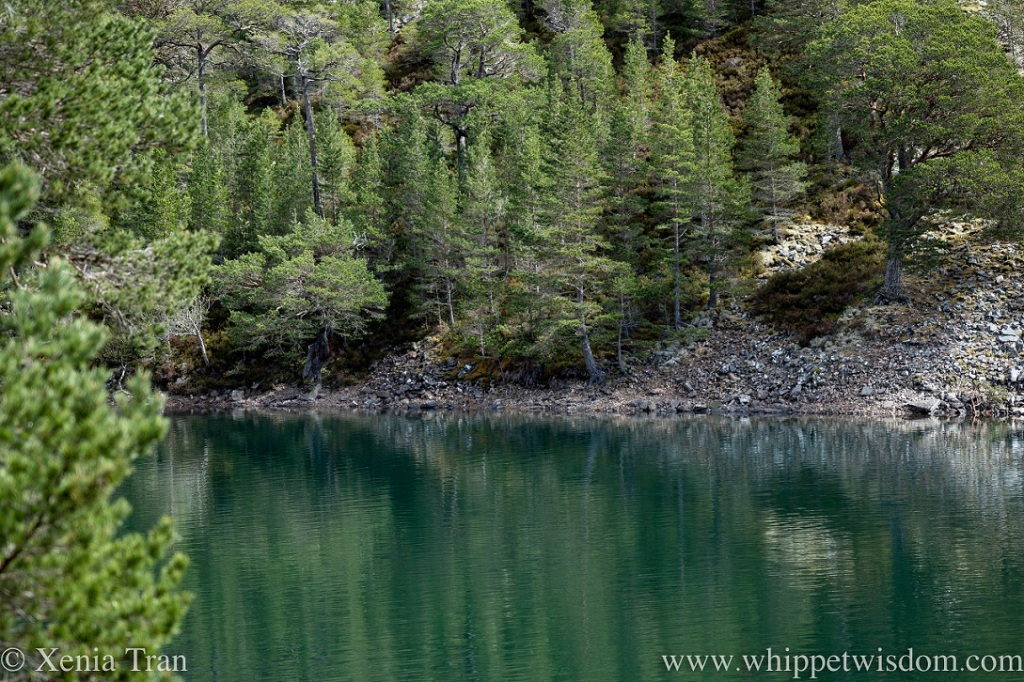 the southern shore of Lochan Uaine in Spring