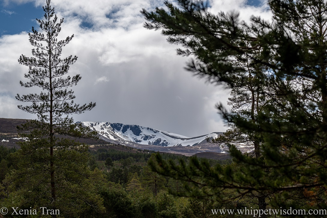 close up of snow-capped corries in the cairngorms
