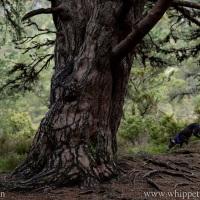 Haiku: Wild Voices