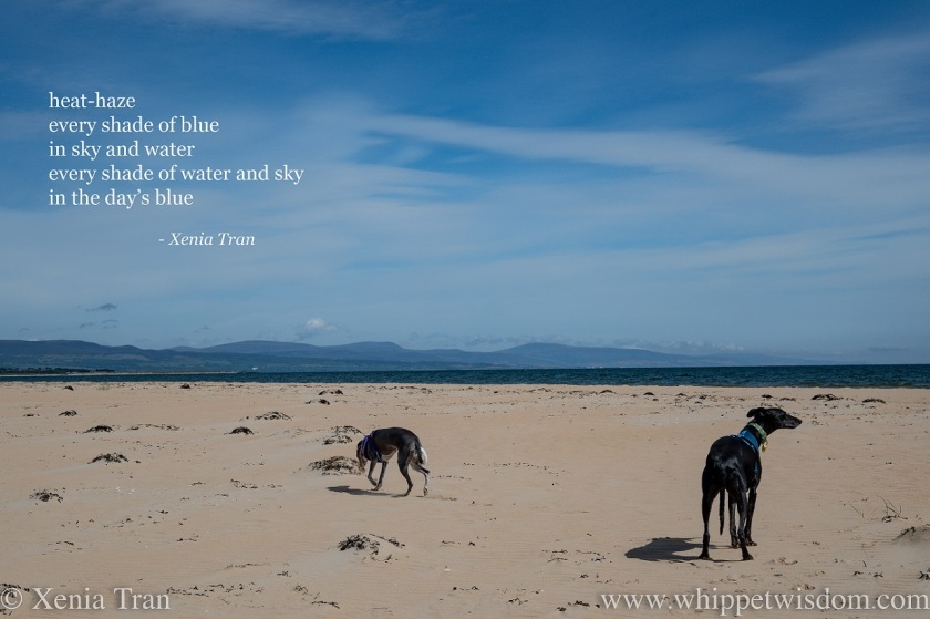 tanka poem by Xenia Tran with two whippets on the beach