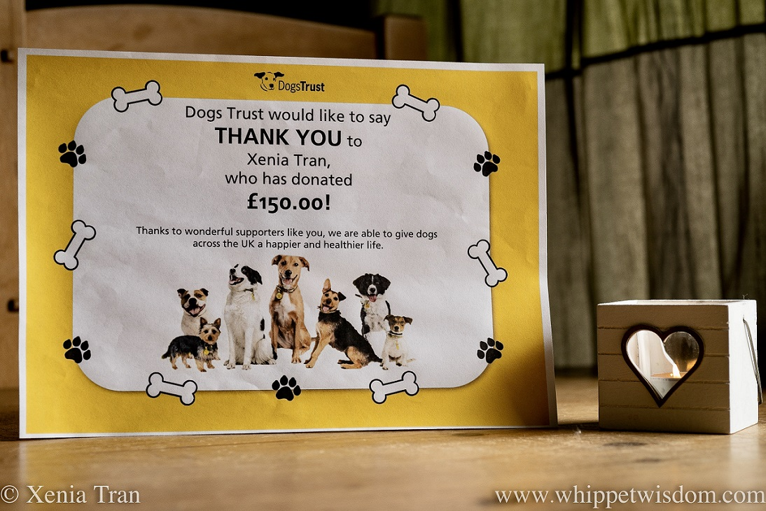 2020 Charity Donation Certificate from Dogs Trust for Xenia Tran