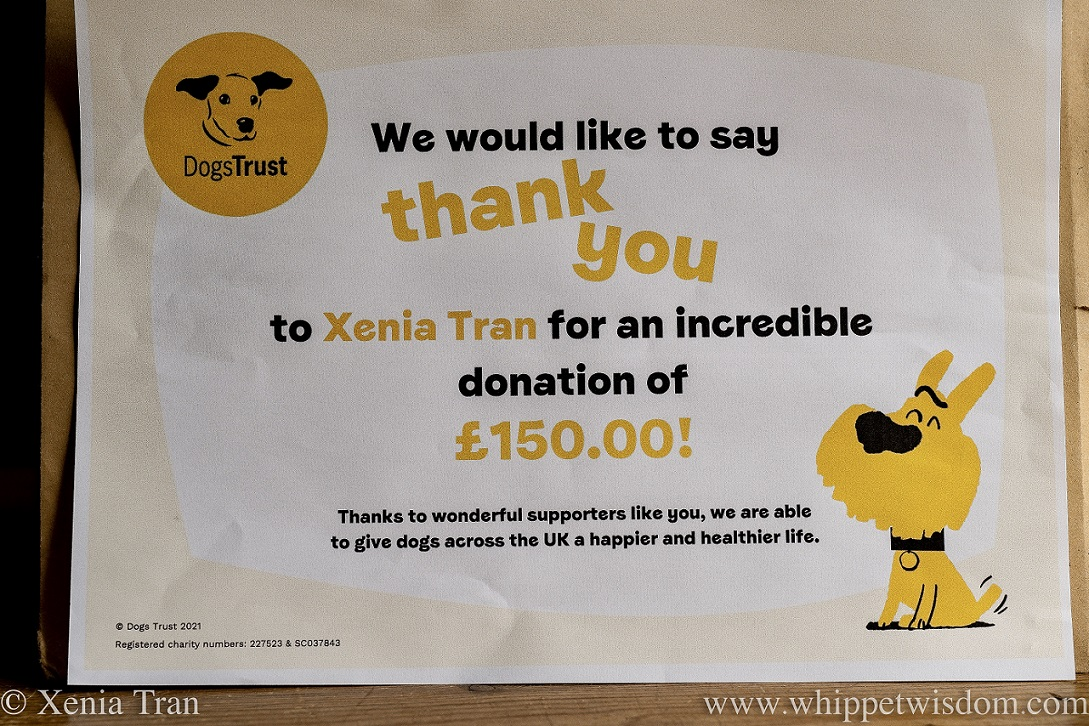 2021 Charity Donation Certificate from Dogs Trust for Xenia Tran