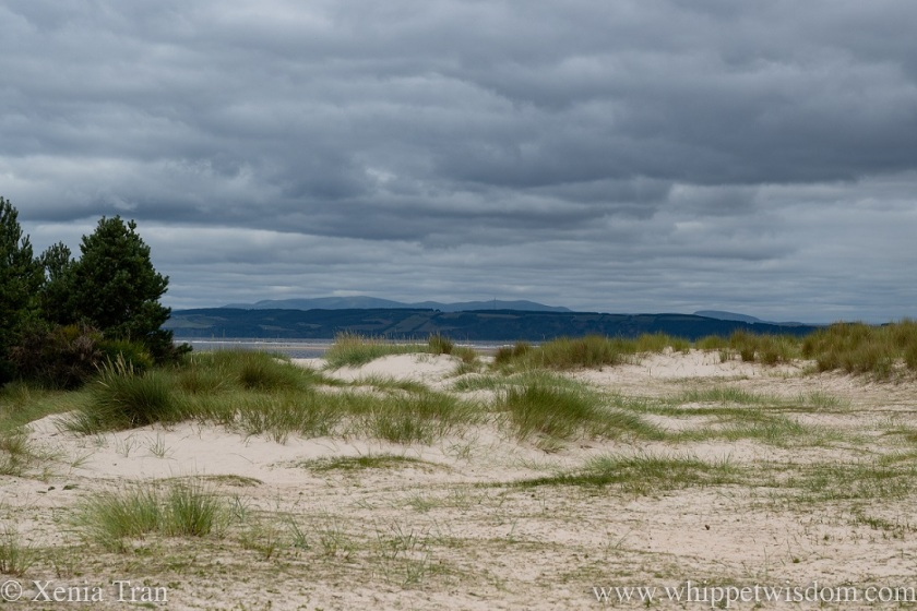 dunes with marram grass and pine trees overlooking the Moray Firth