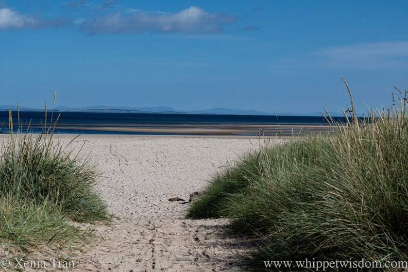 view from the dunes of beach, sea and tidal sand in late summer