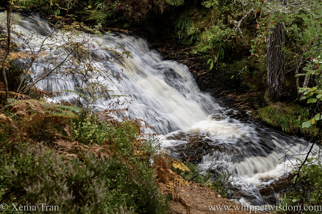 a waterfall in full spate flowing through the forest