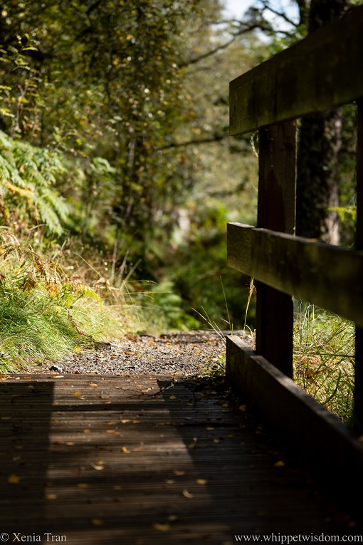 a wooden bridge over a stream in the forest