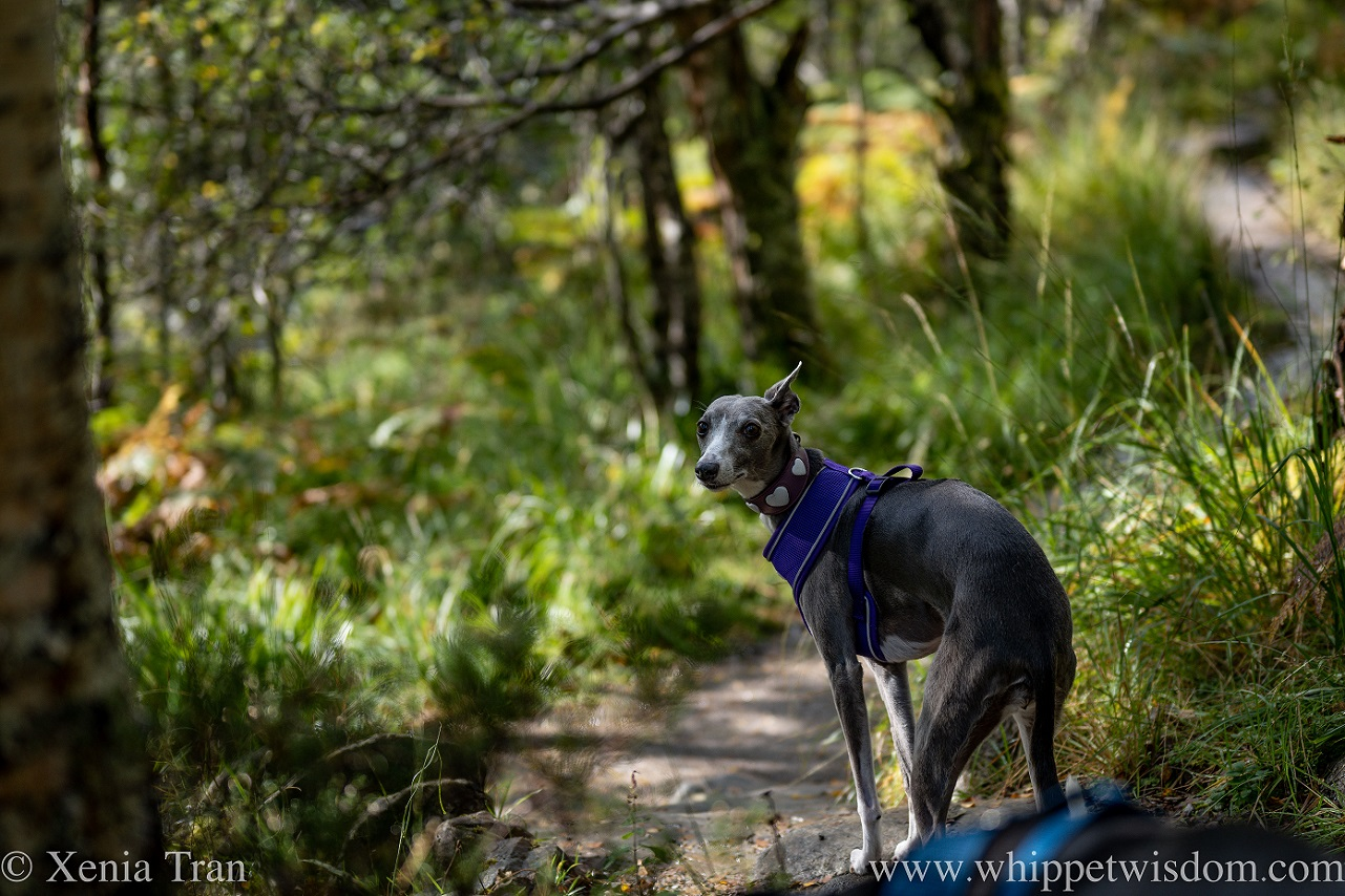 Wordless Wednesday: Dappled Gold and Green