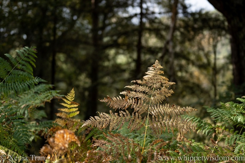 a golden fern lit up by the low sun in the forest
